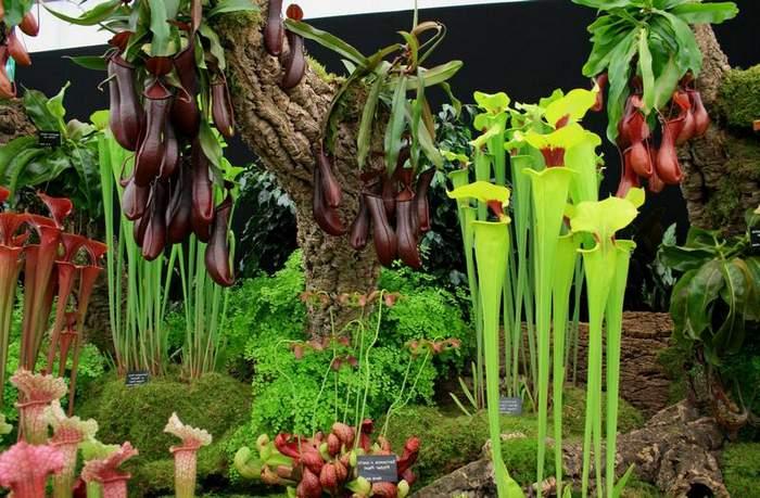 Растения-хищники, Plants predators, Рослини-хижаки