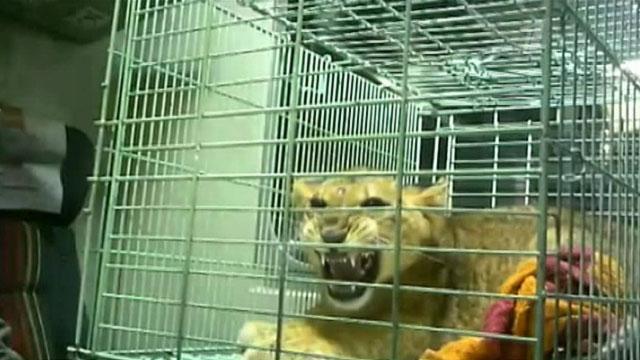 знущання над тваринами