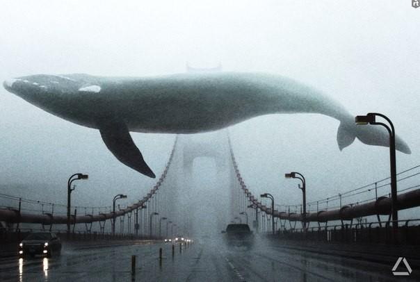 Spiel Blauwal
