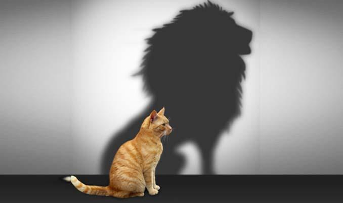 Уверенность в себе, Self-confidence, Впевненість у собі