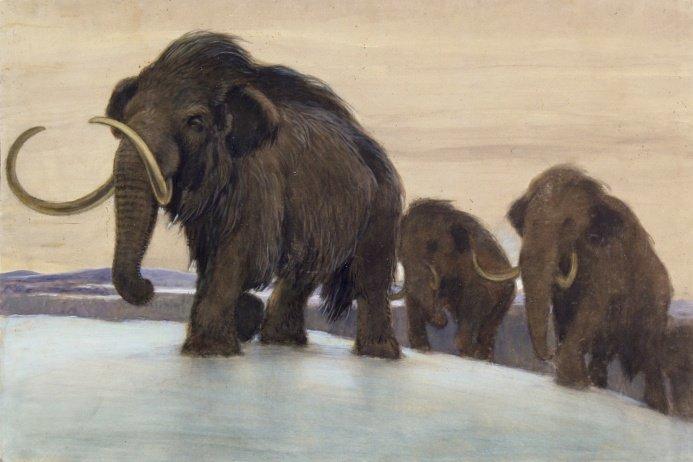 Мамонты, Mammoths, Мамонти