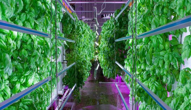 vertikale Farm
