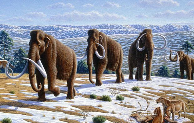 mammoth мамонтов